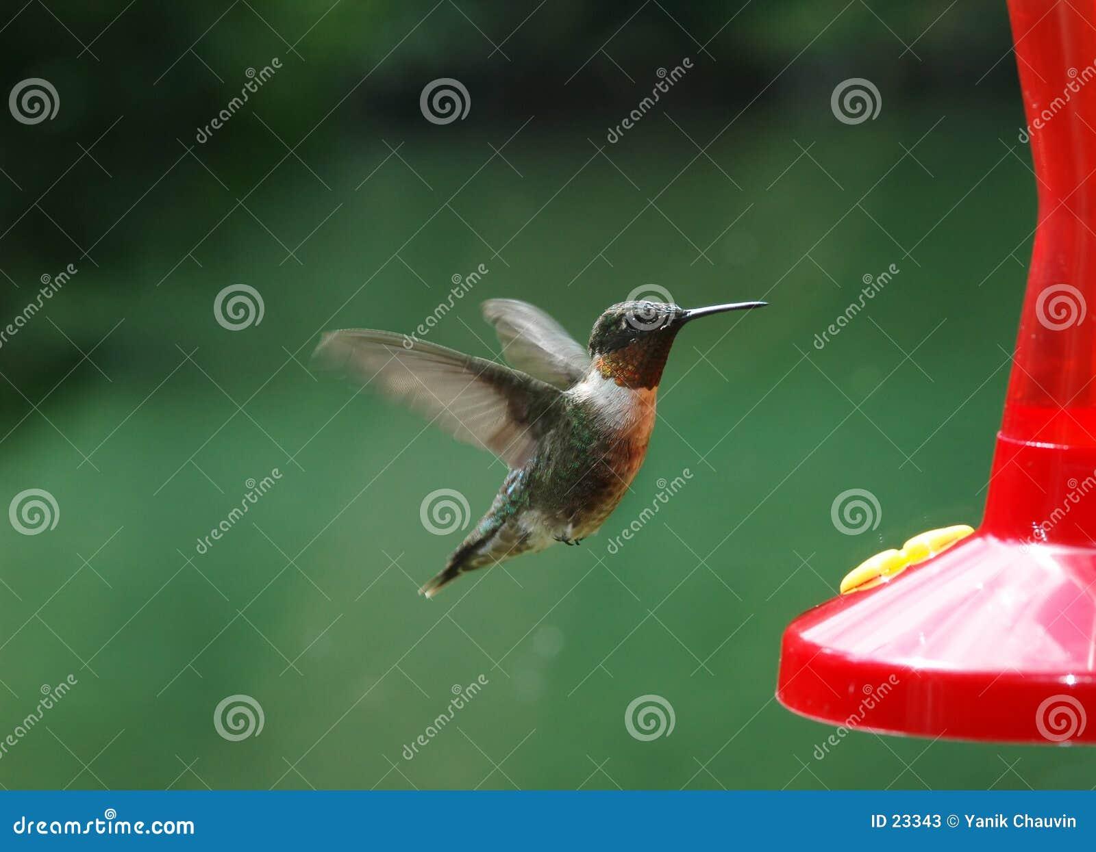 Zoemende Vogel 1