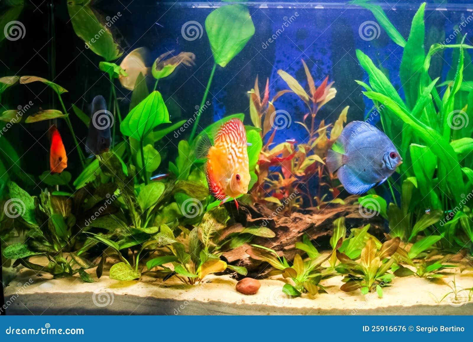 Zoetwater Aquarium Royalty vrije Stock Afbeelding   Afbeelding  25916676