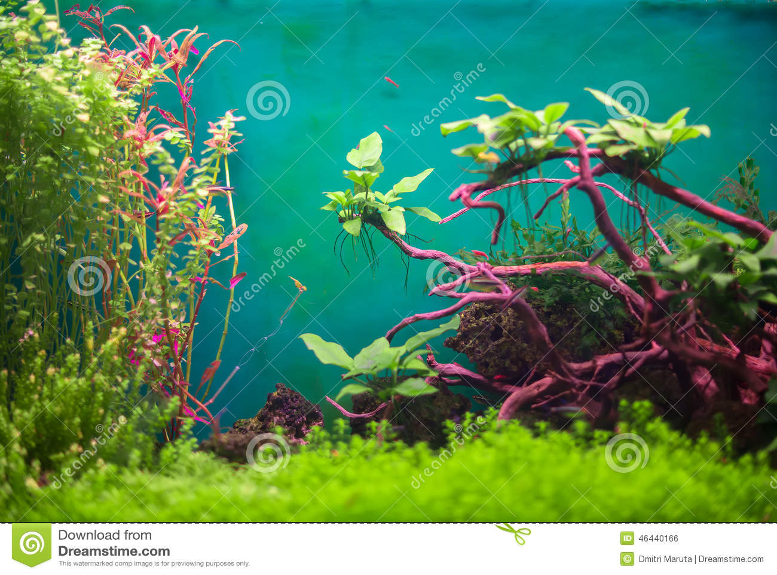 Zoetwater groen aquarium