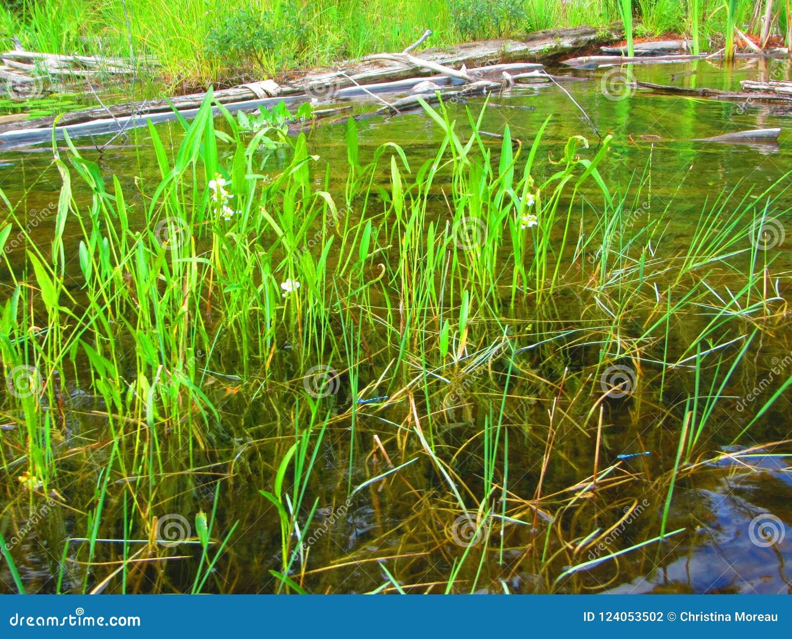 Zoetwater optredende aquatische installaties onbekende species