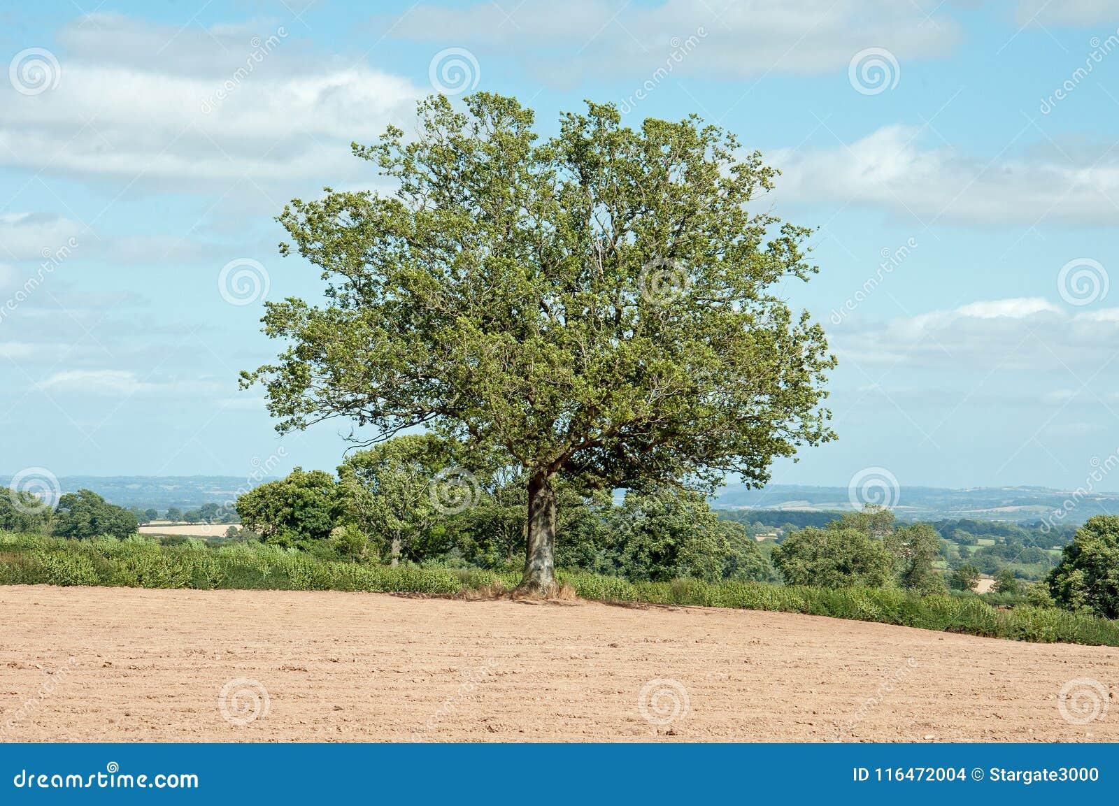 Zomerlandschap in het Britse platteland