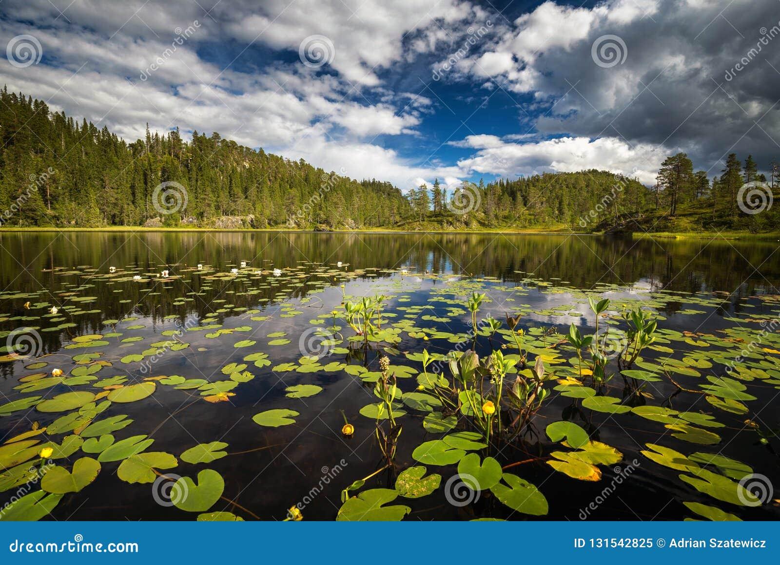 Zomervegetatie op het kleine bergmeer dichtbij Jervskogen, Jonsvatnet-gebied in middennoorwegen