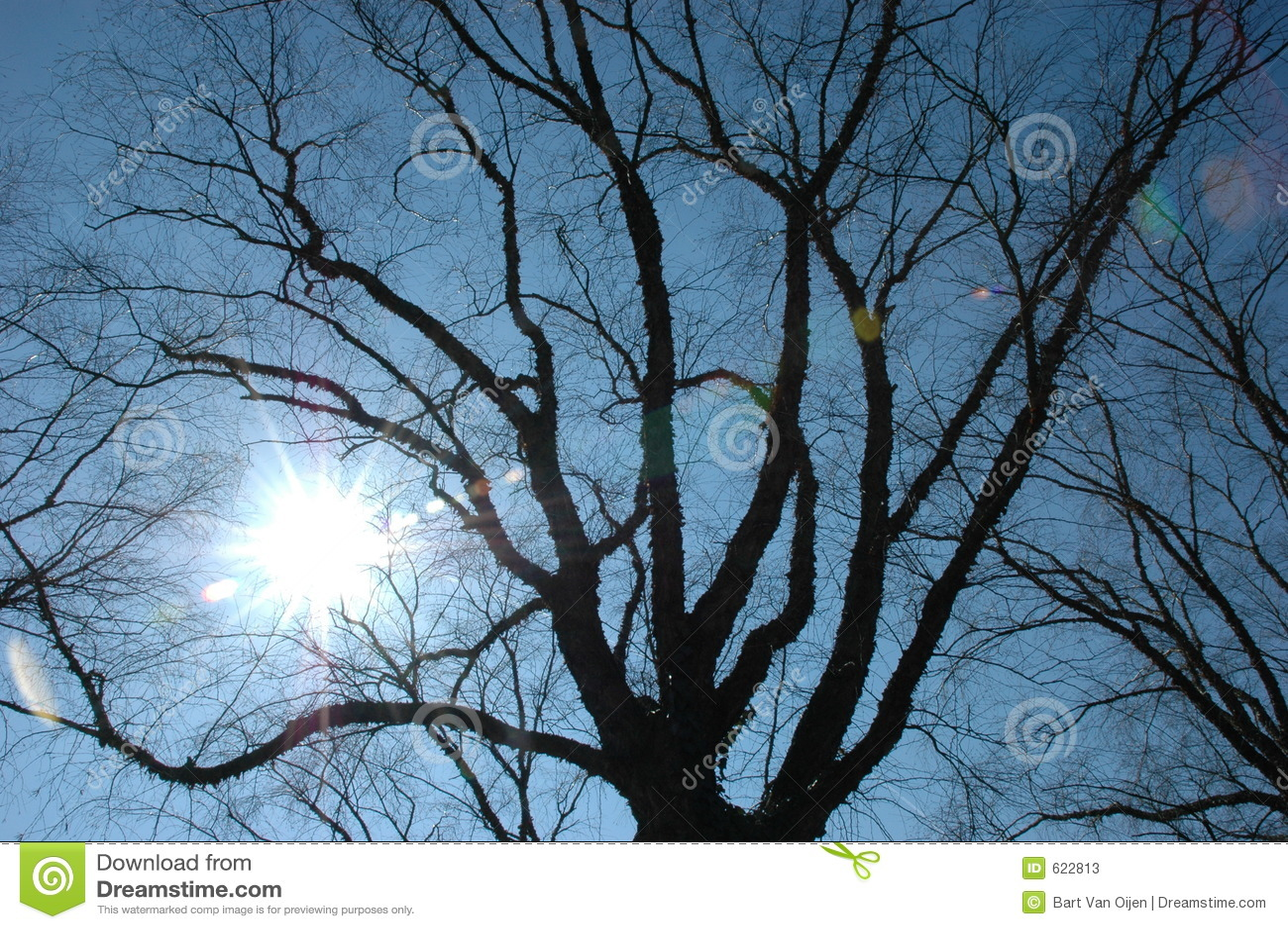 Zon en blauwe hemel
