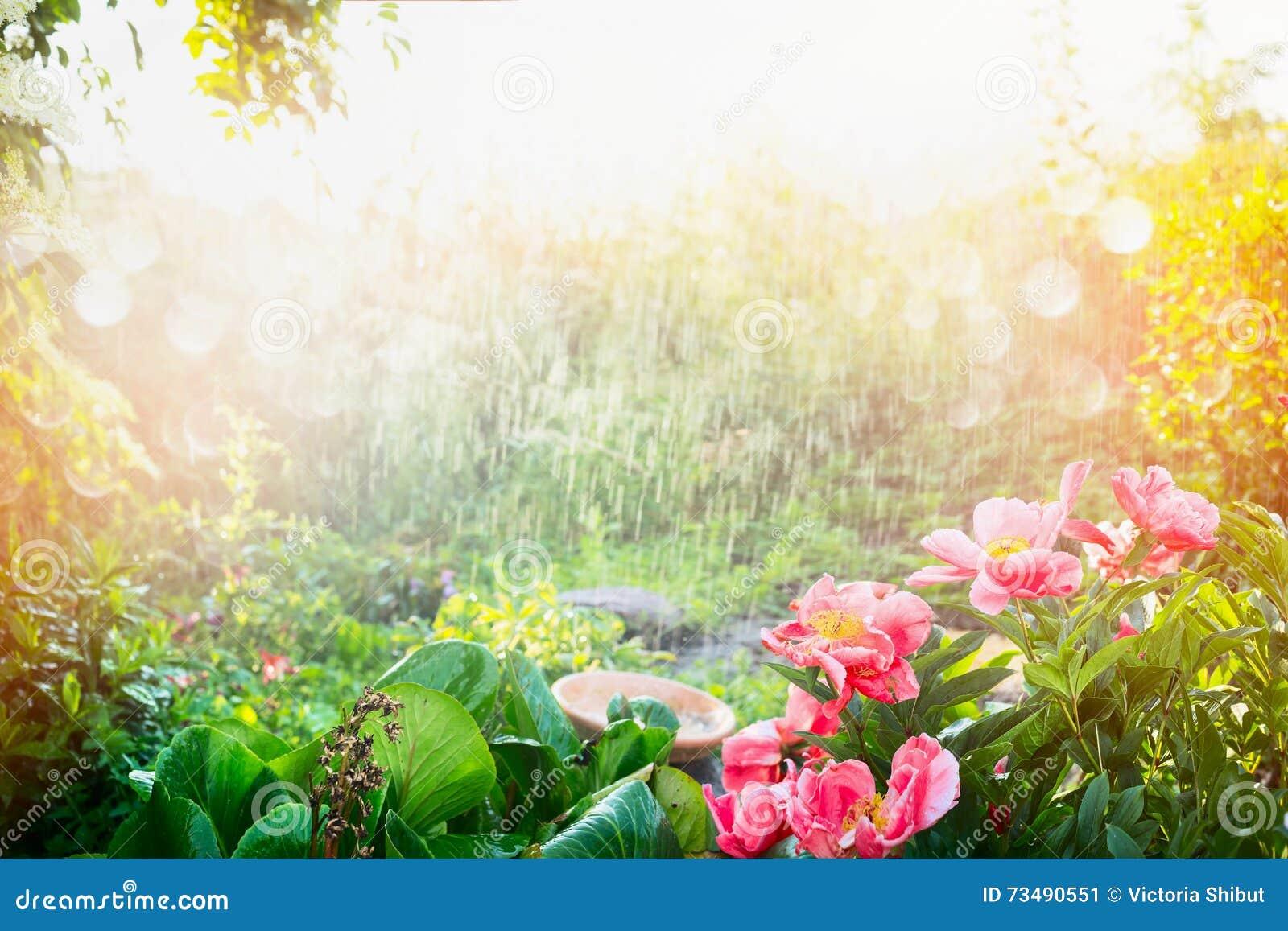 Regen En Zonneschijn : Zondouche in bloemtuin regen met zonneschijn in tuin of park