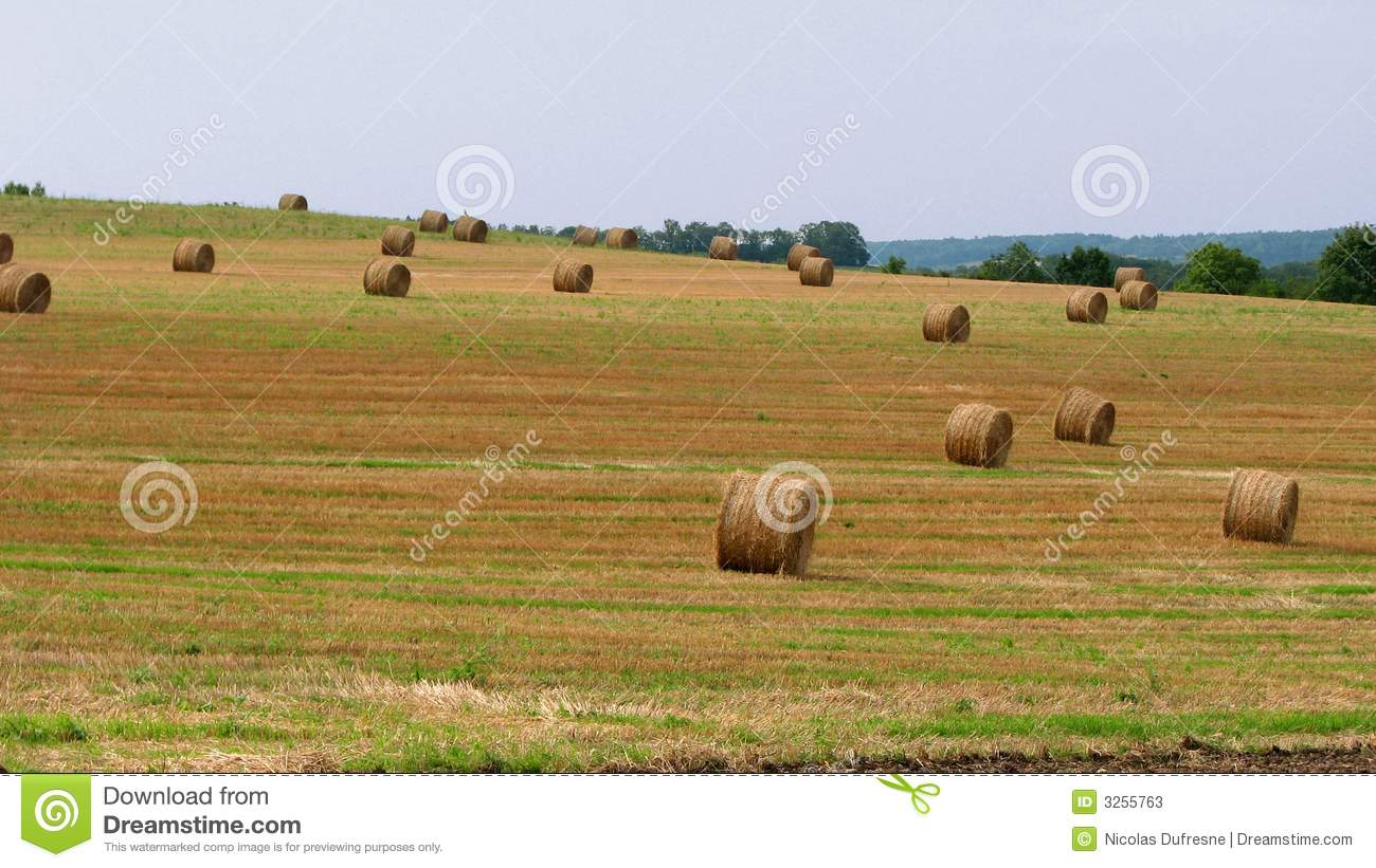 zone agricole image stock image du agriculture environnement 3255763