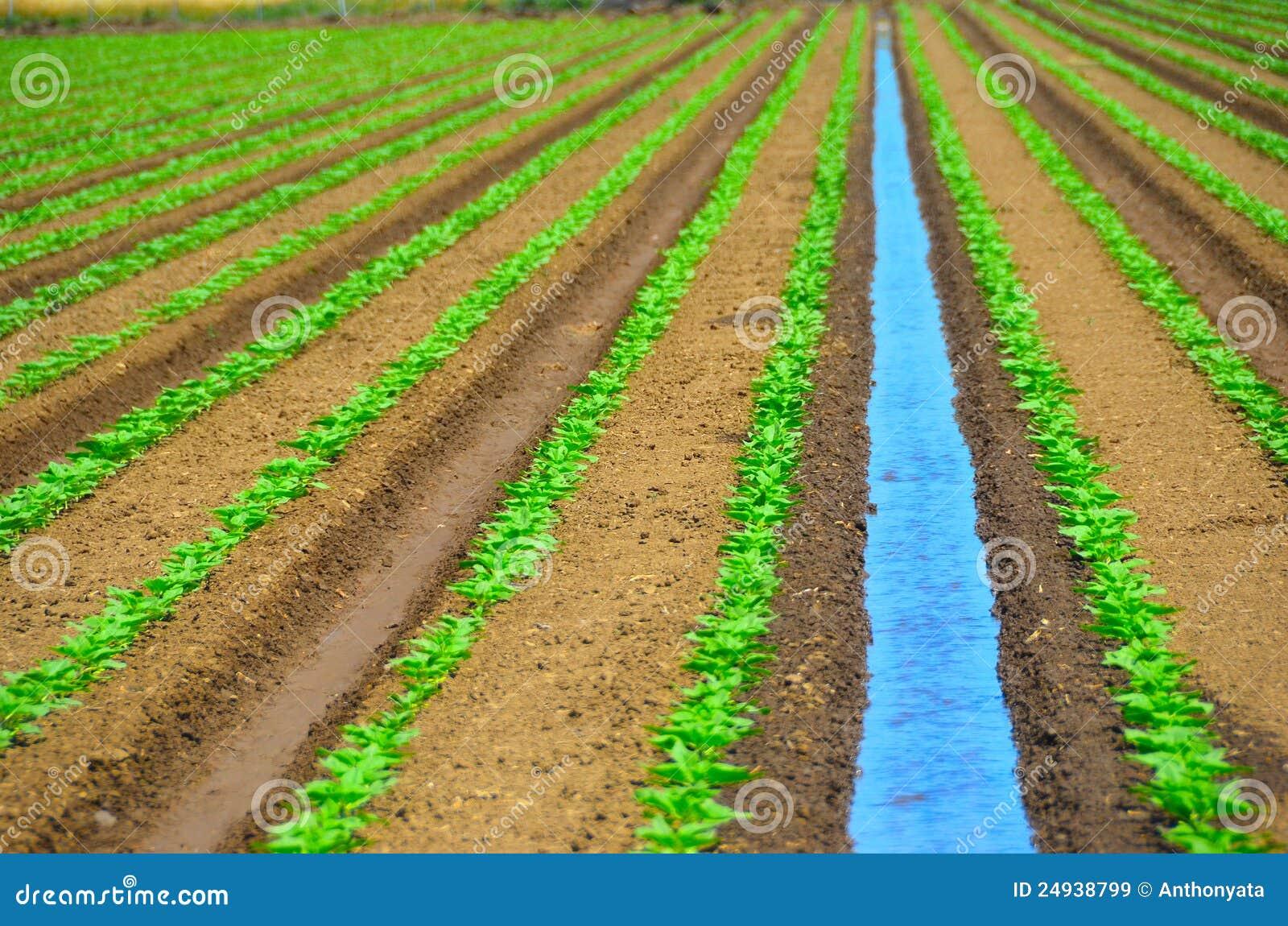 Zone de irrigation des collectes