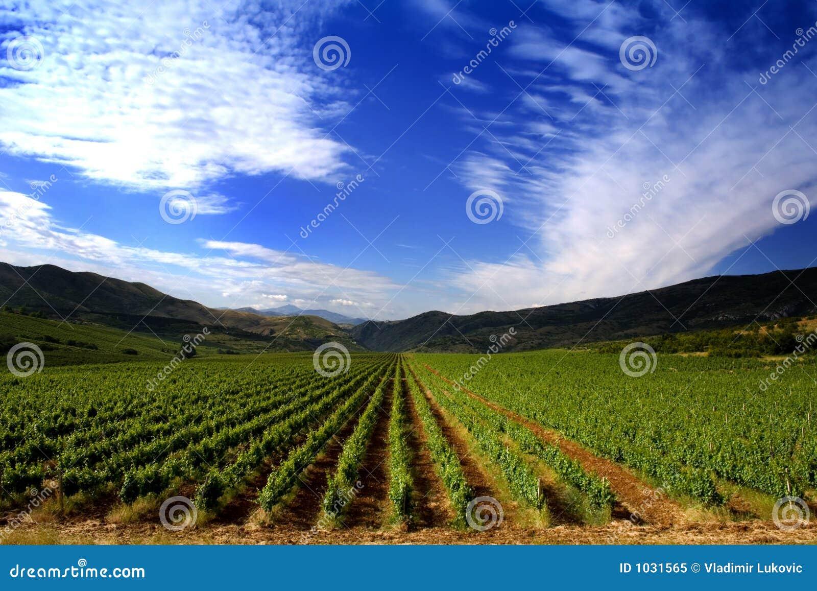 Zone de vigne