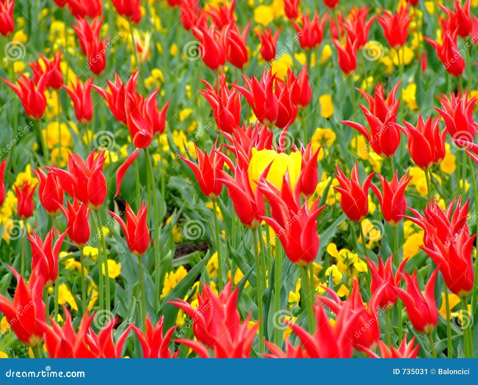 Zone des fleurs 2