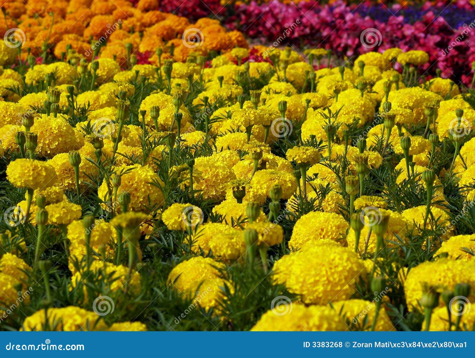 Zone des fleurs