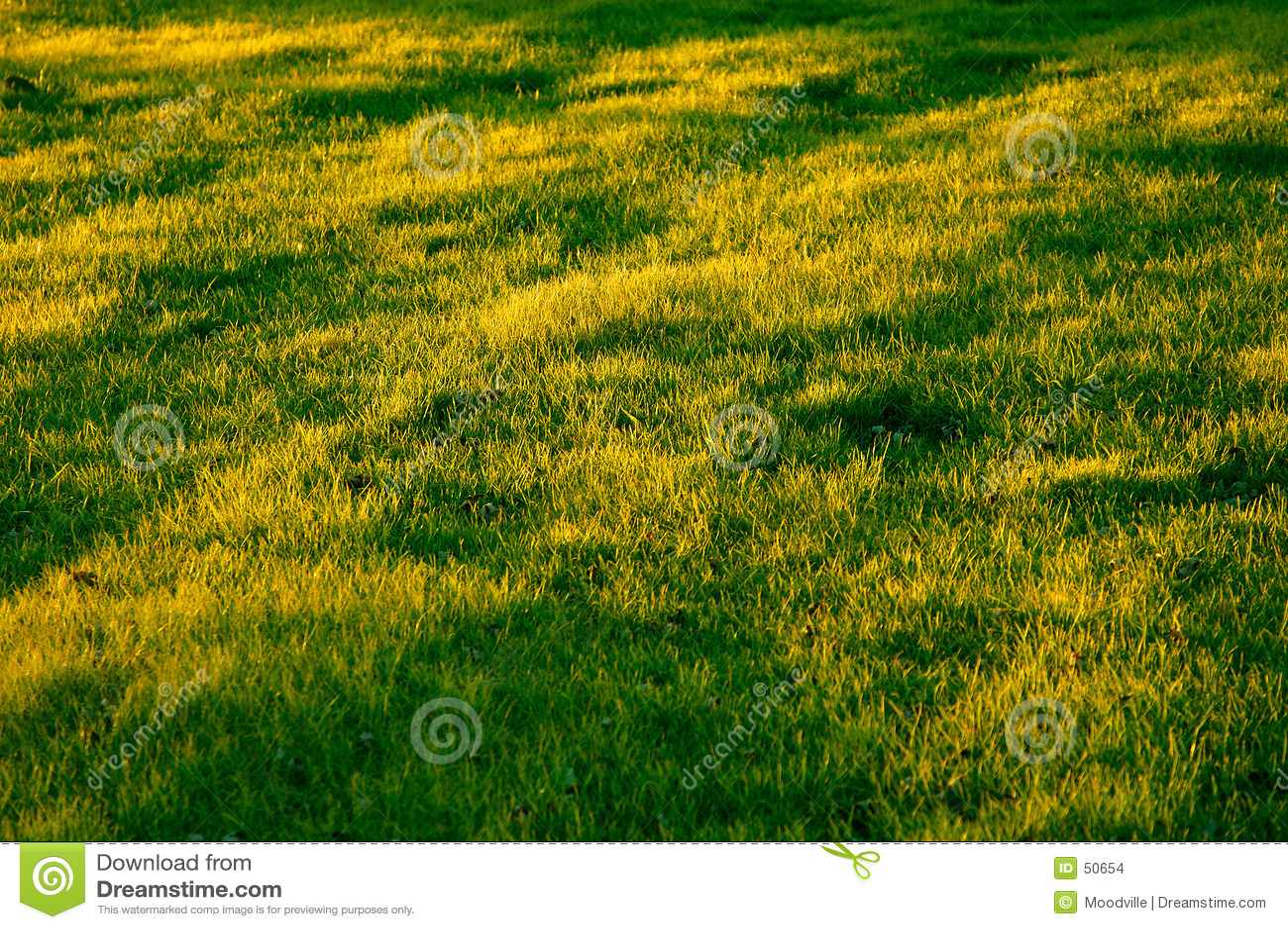 Zone herbeuse