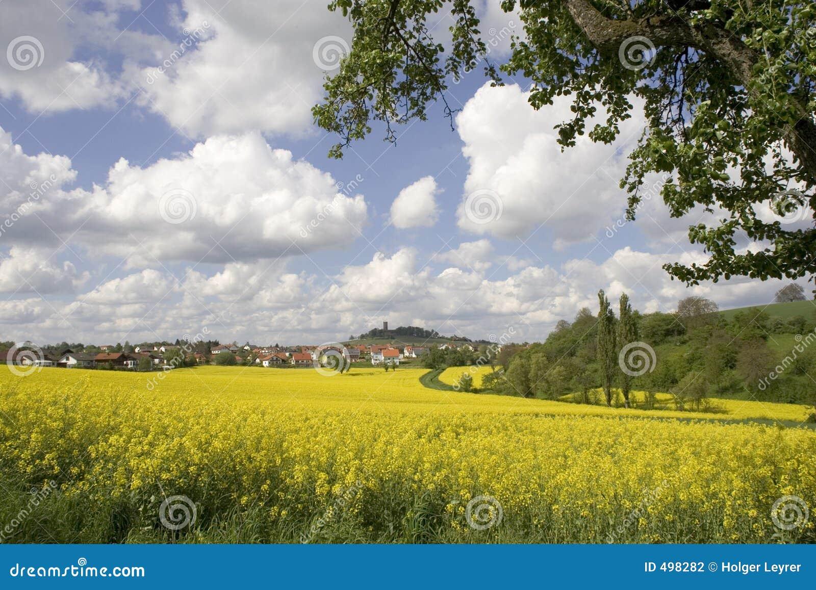 Zone jaune des fleurs