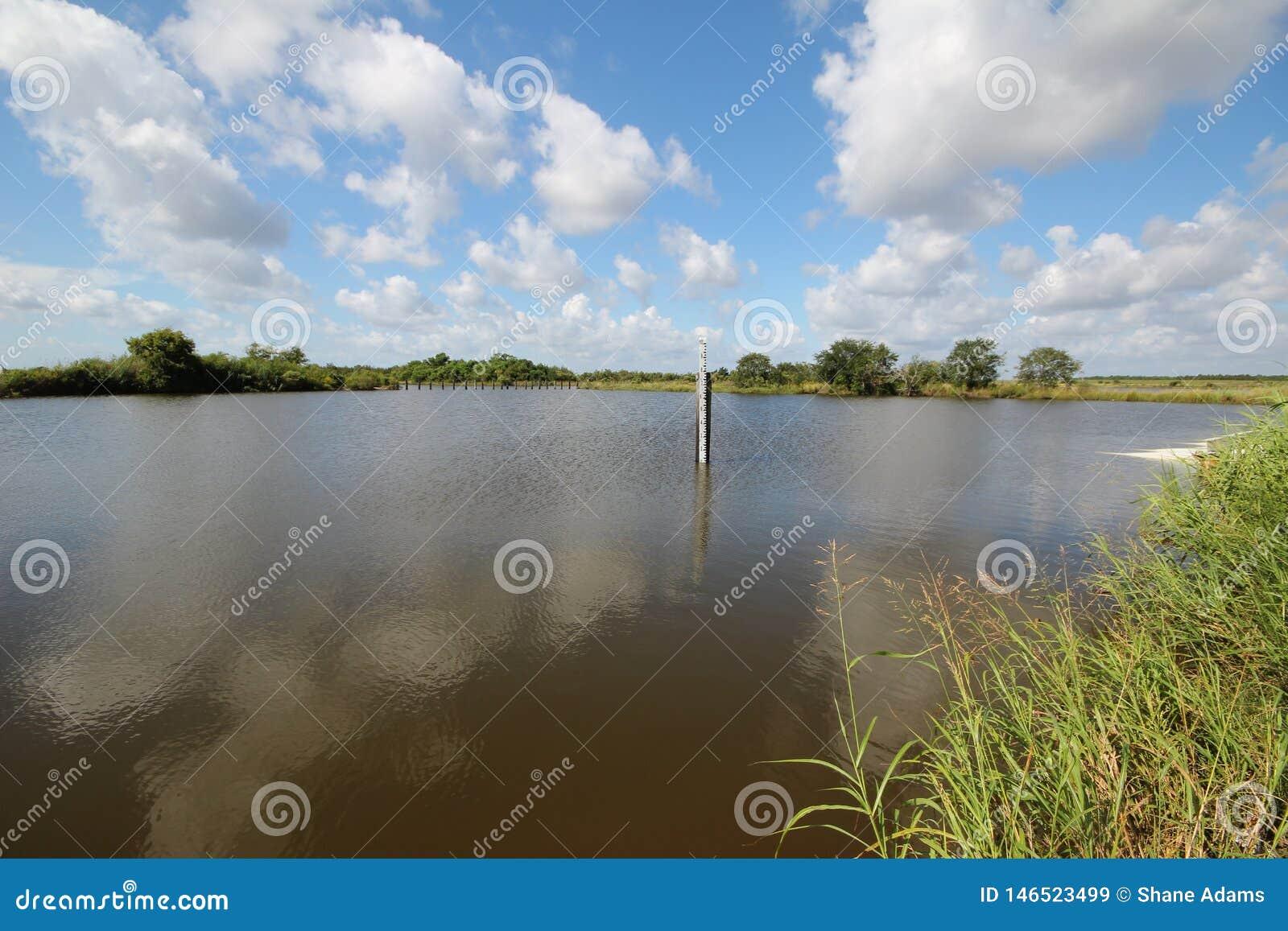 Zone umide del ramo paludoso di fiume della Luisiana