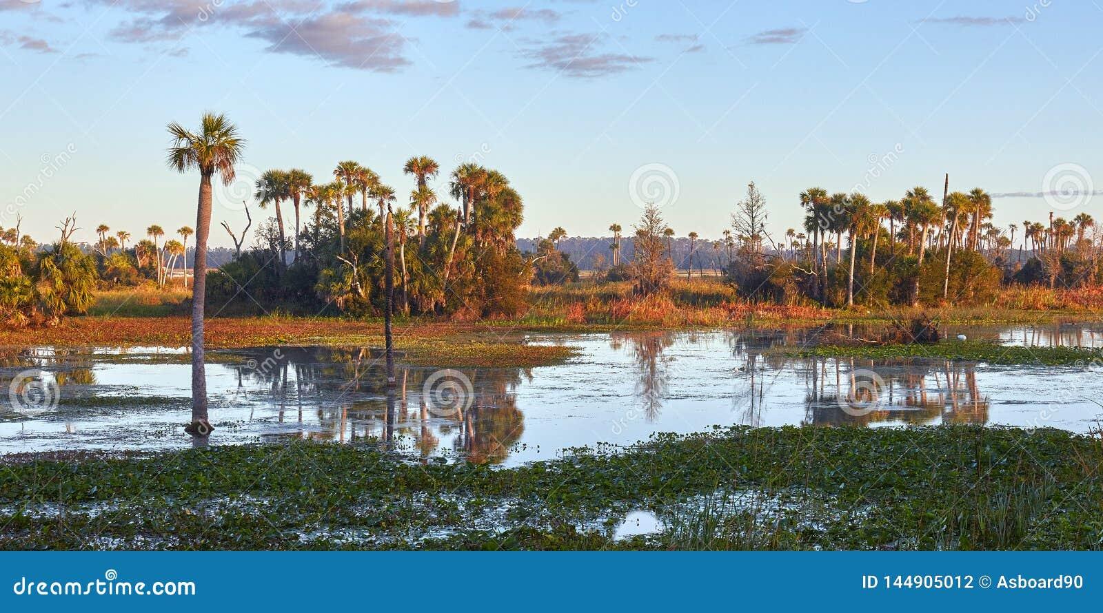 Zone umide sceniche di Florida