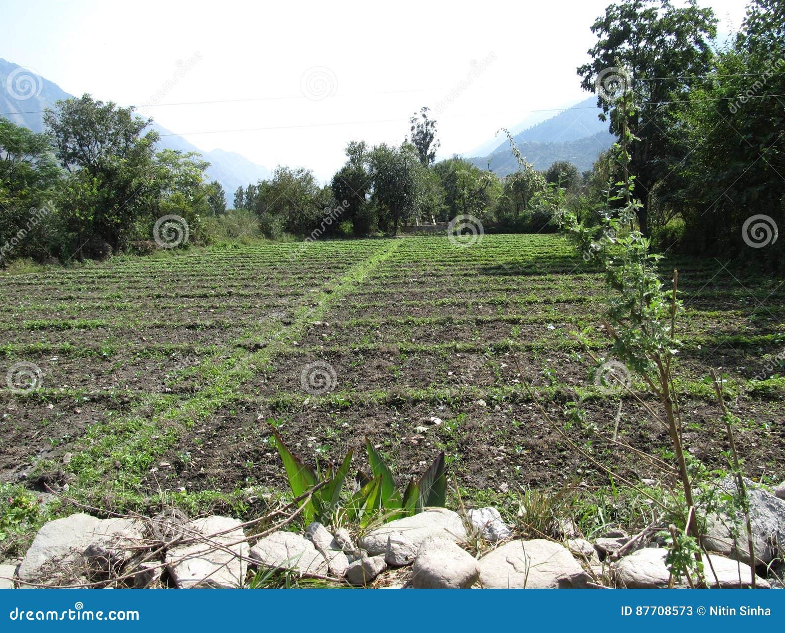 Zone verte de ferme