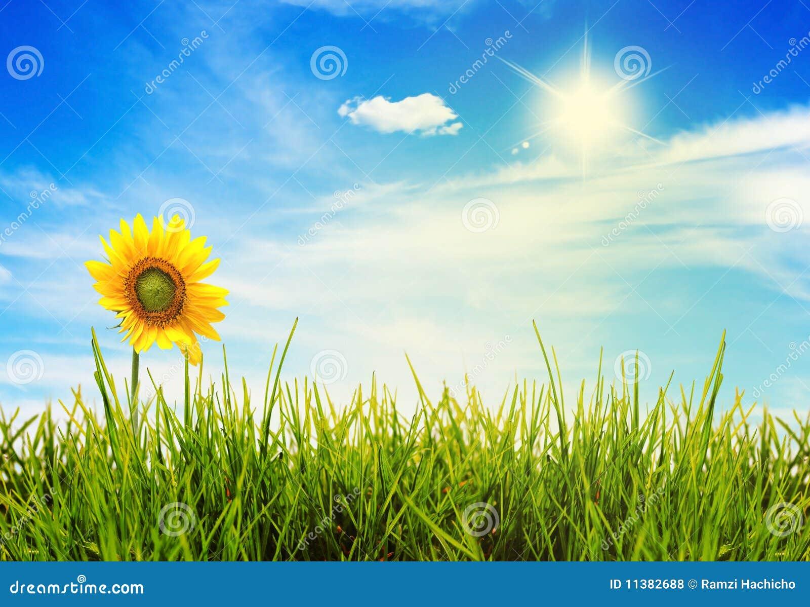 Zones de vert d horizontal d été et beau ciel