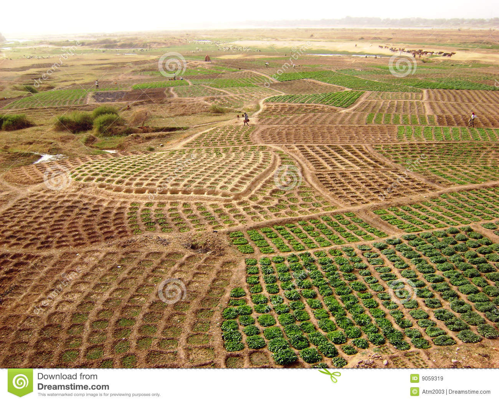 Zones du Ghana - horizontal rural africain