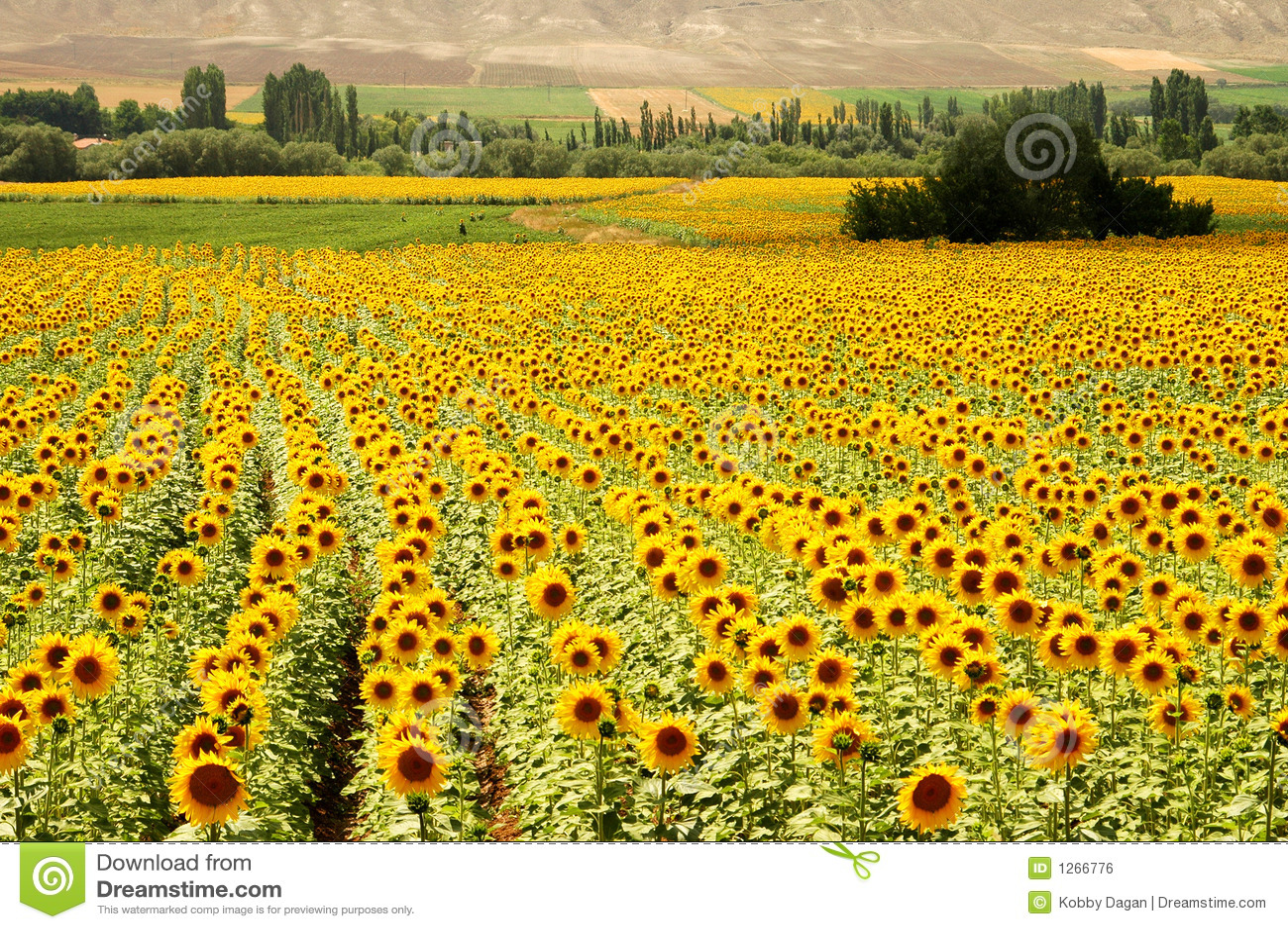 Zones jaunes