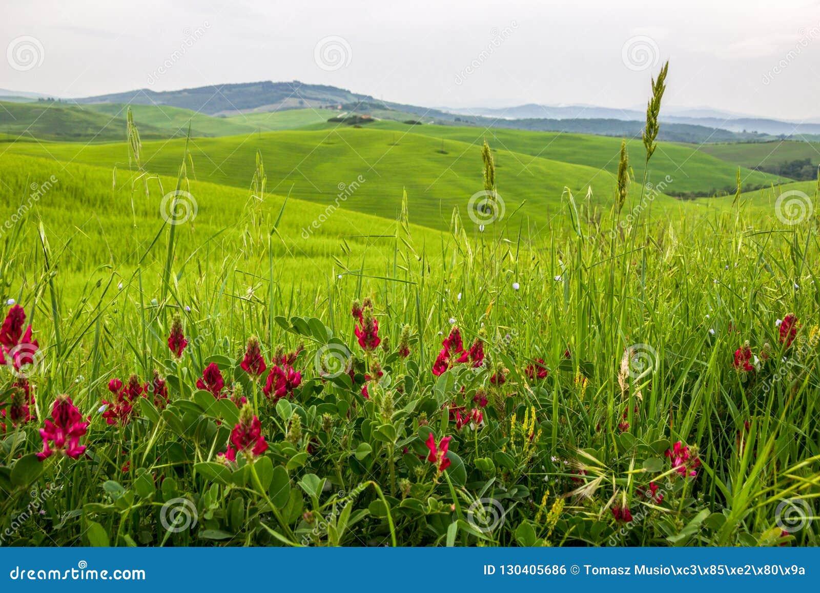 Zones vertes en Toscane