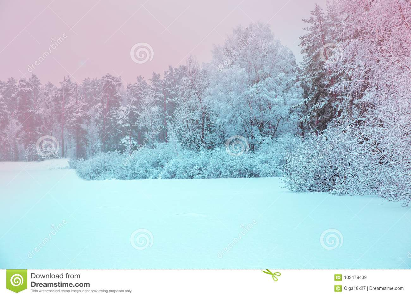 Zonlicht in het de winter bospanorama Het sprookje van de panoramawinter