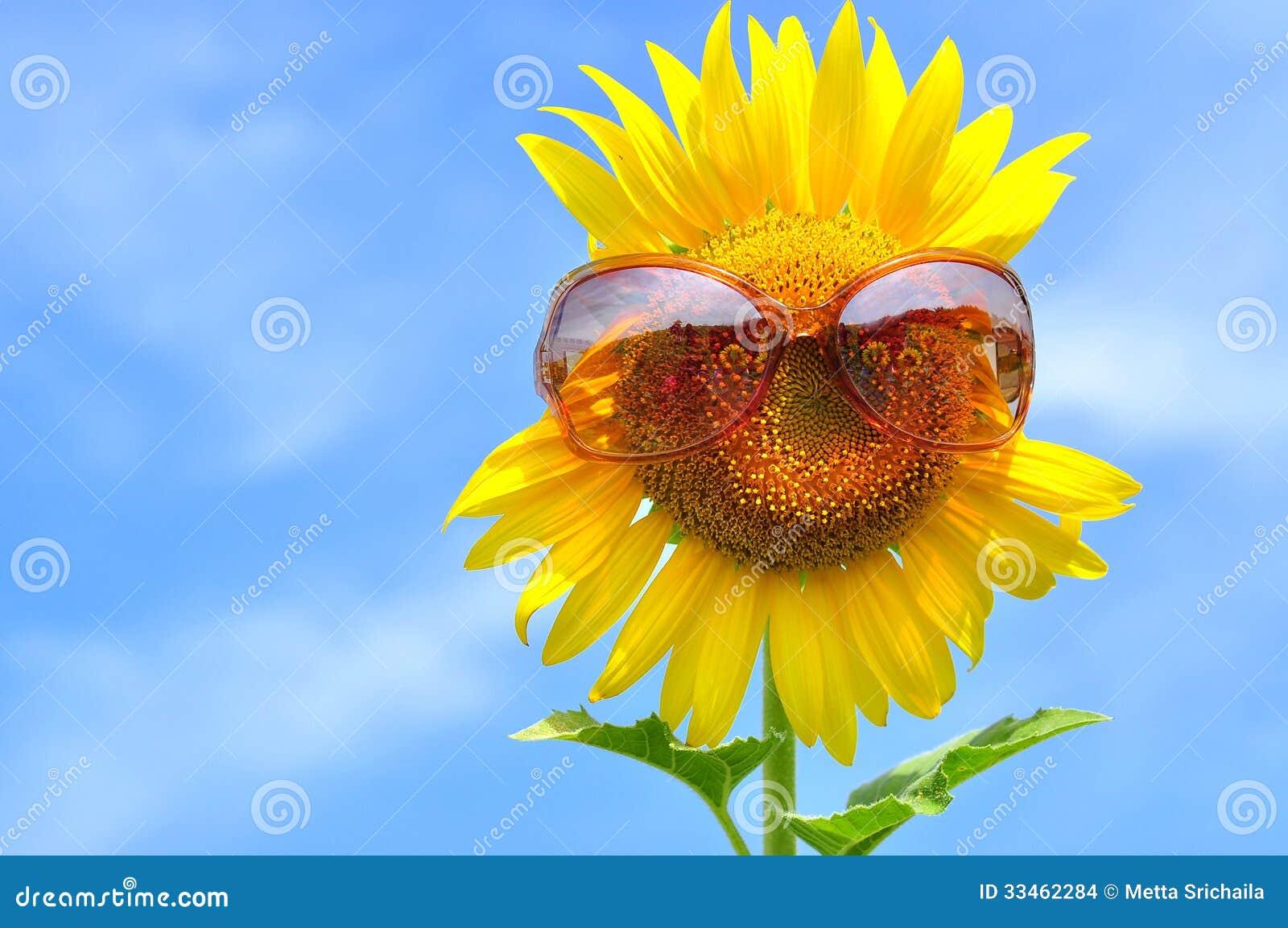 Zonnebloem met zonnebril
