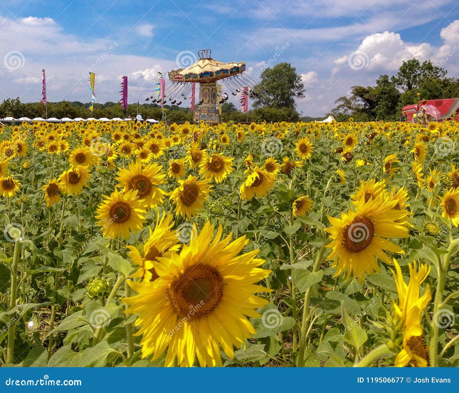 Zonnebloemen en Carrousel