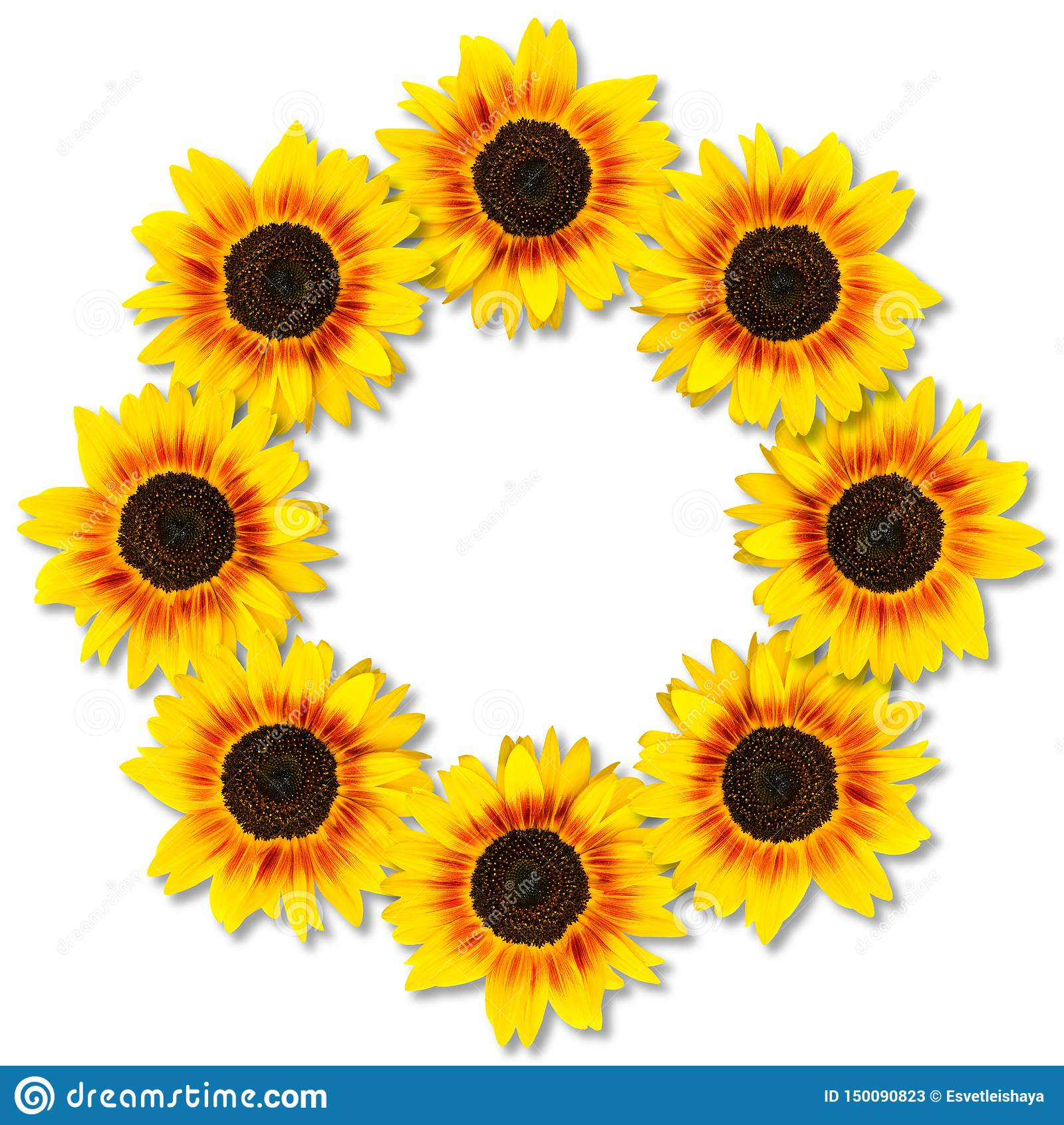 Zonnebloemenvorm om kader Bloemen frame Spot omhoog of malplaatje Vlak leg, hoogste mening