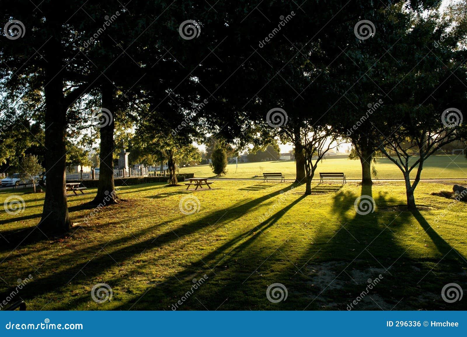 Zonneschijn door de bomen
