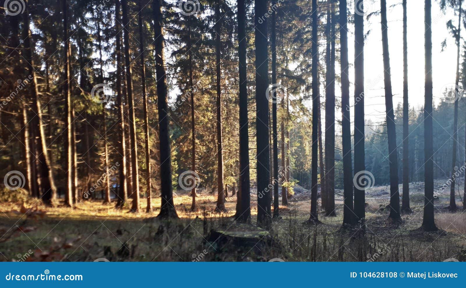 Download Zonnig bos stock foto. Afbeelding bestaande uit zonnig - 104628108