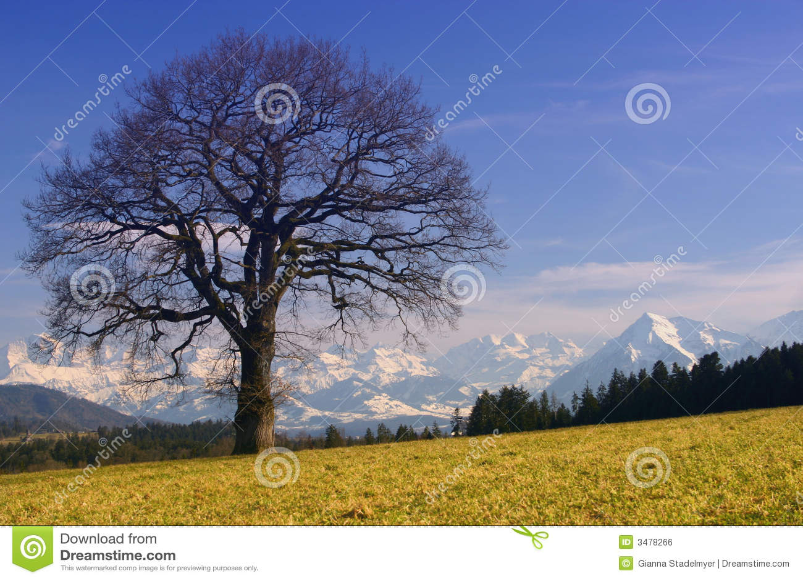Zonnige Alpen