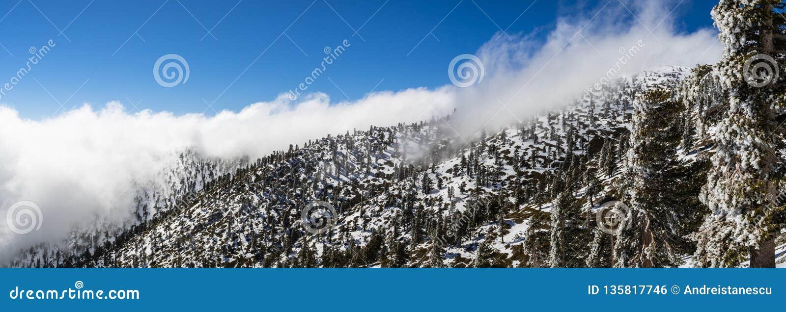Zonnige de winterdag met gevallen sneeuw en een overzees van witte wolken op de sleep aan MT San Antonio (MT Baldy), de provincie