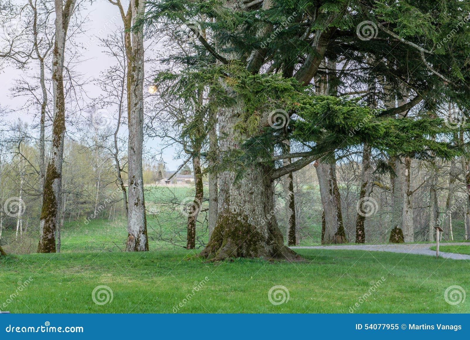 Zonnige toeristensleep in het hout in de lente