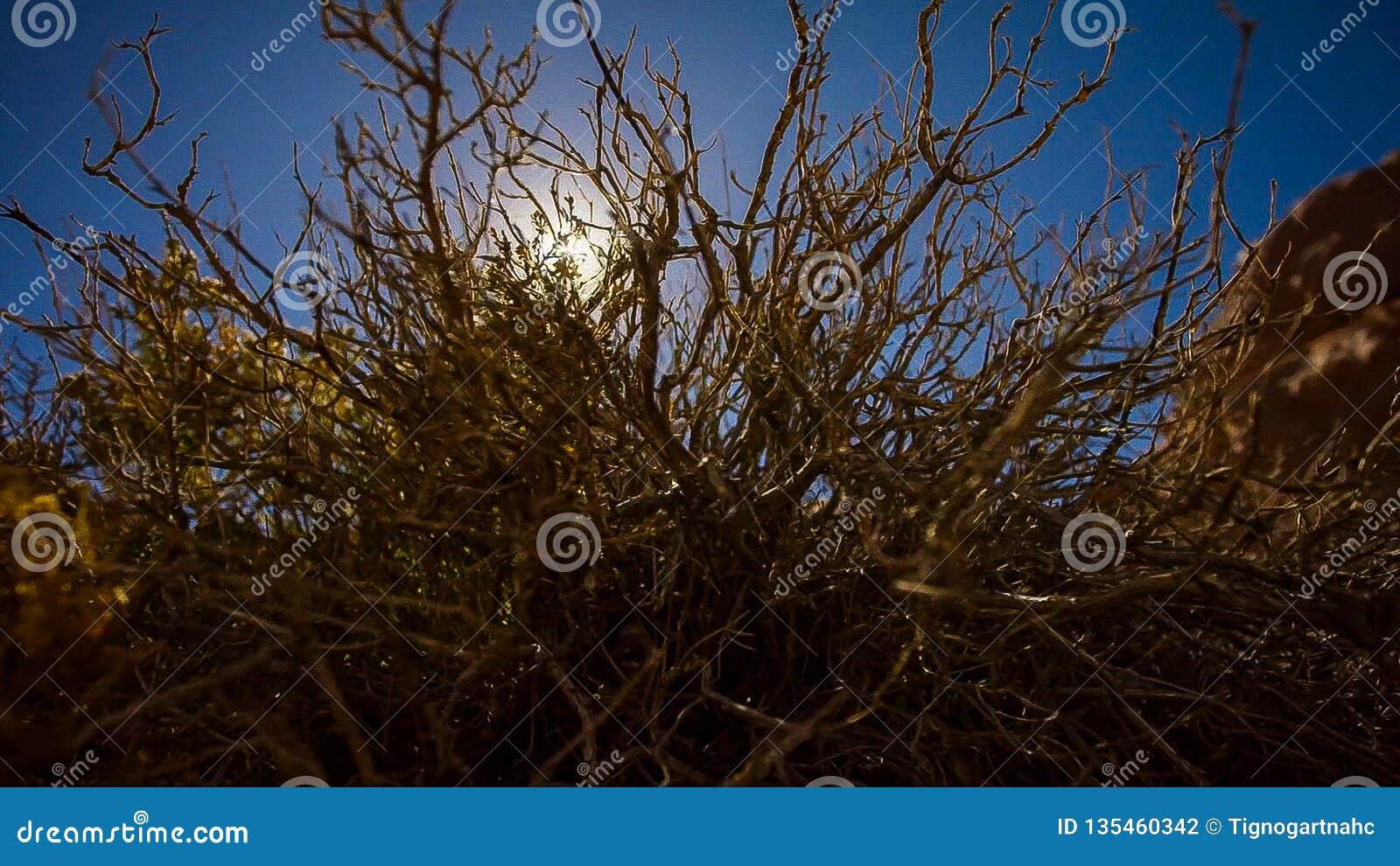 Zononderbrekingen over de woestijn aangezien het boven een berg toeneemt