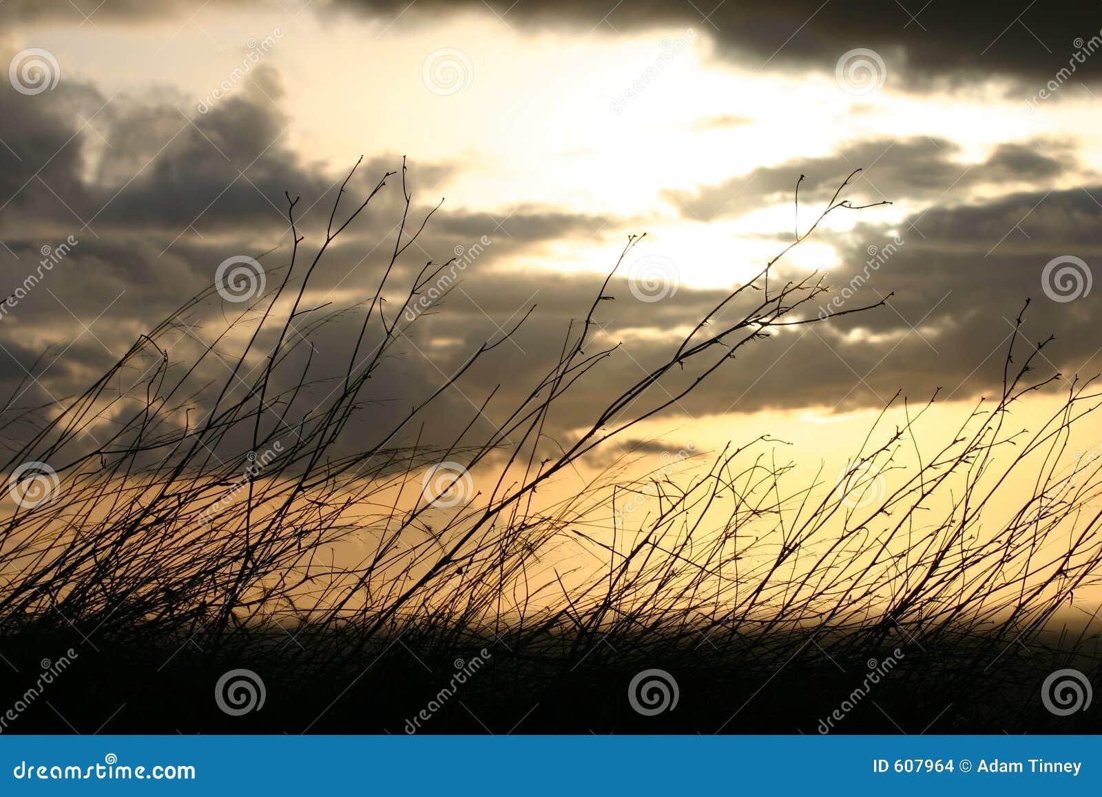 Zonsondergang achter Borstel
