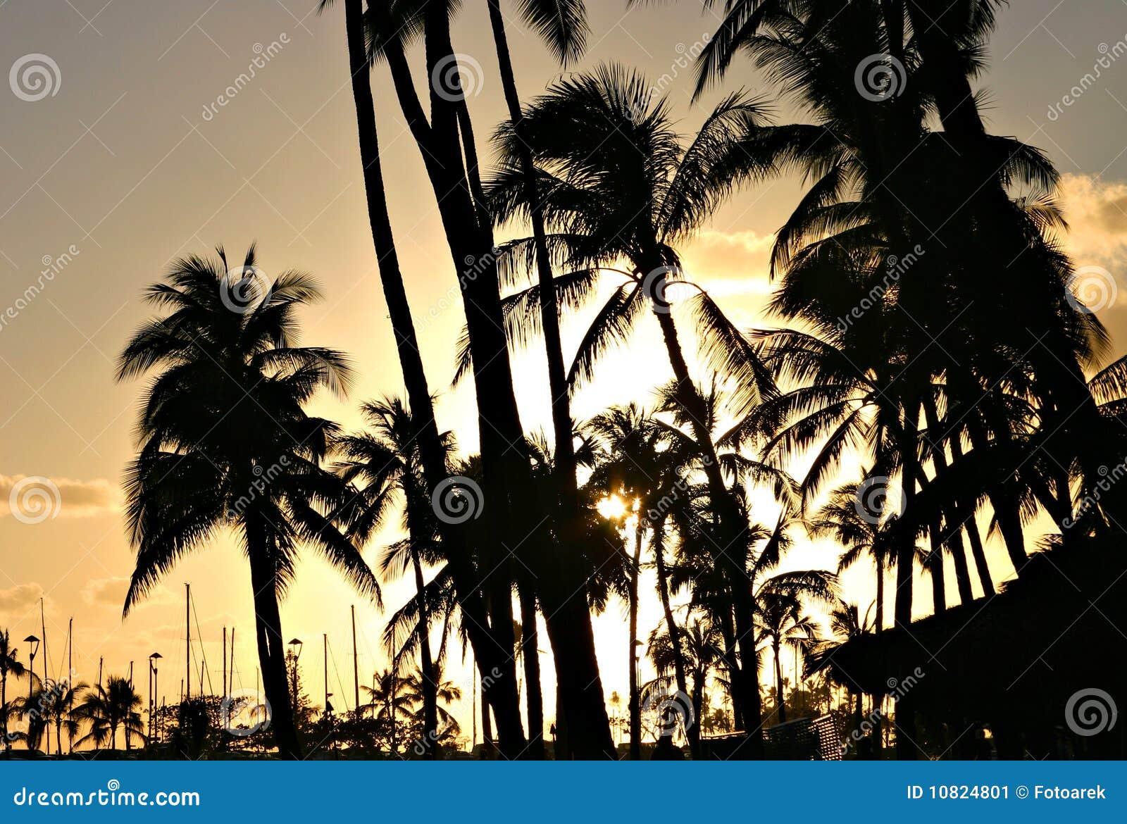 Zonsondergang achter palmen