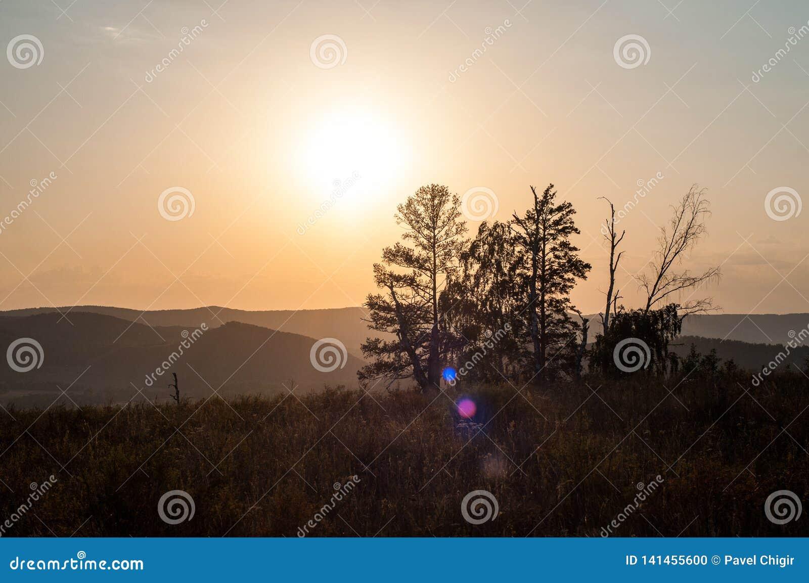 Zonsondergang in de bergen, in de voorgrondsparren en verscheidene boomboomstammen