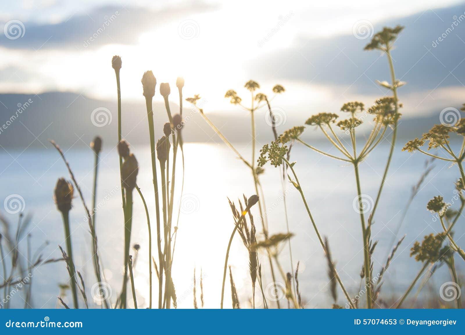 Zonsondergang door het gras wordt gezien dat