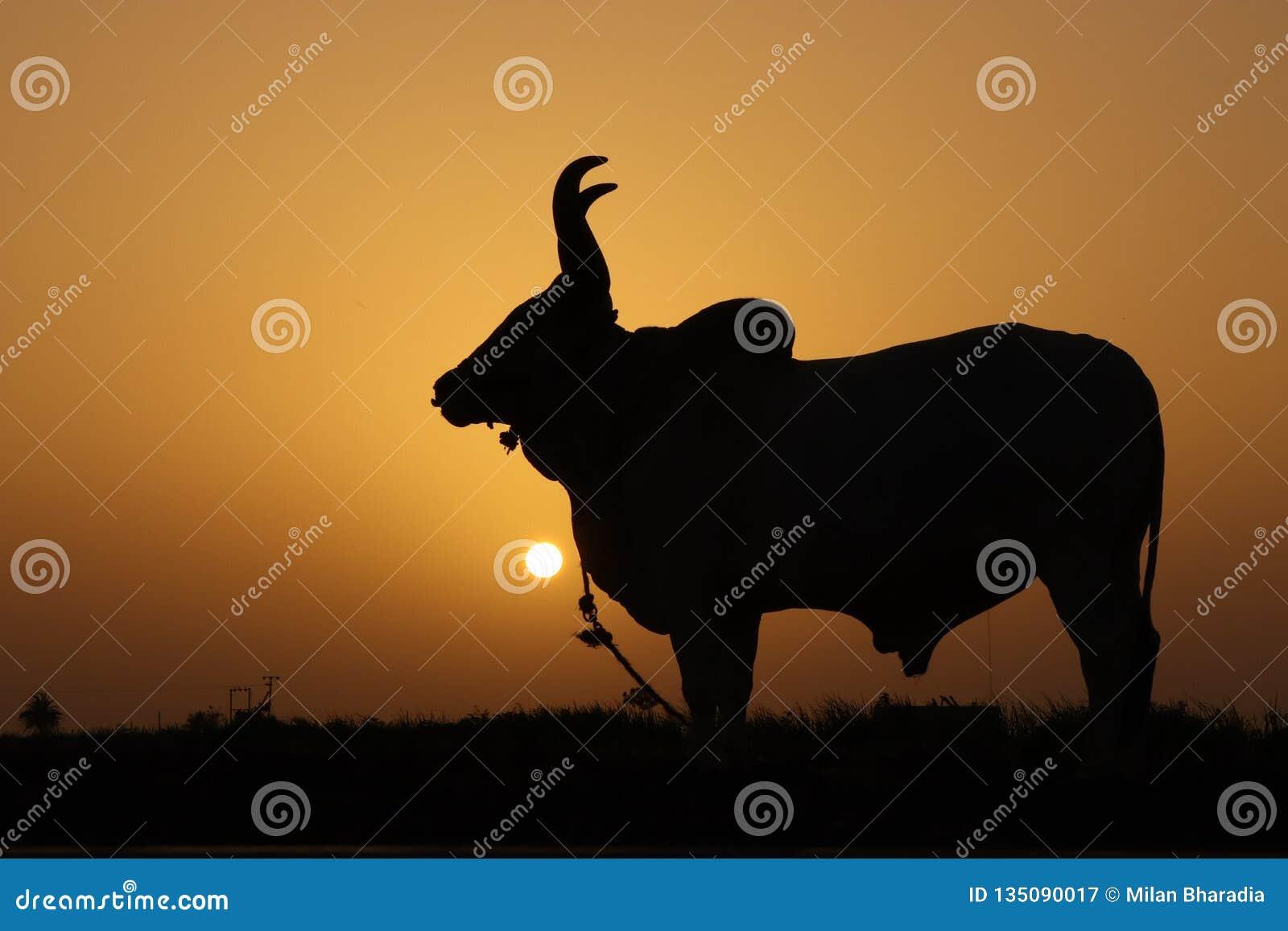 Zonsondergang en dier
