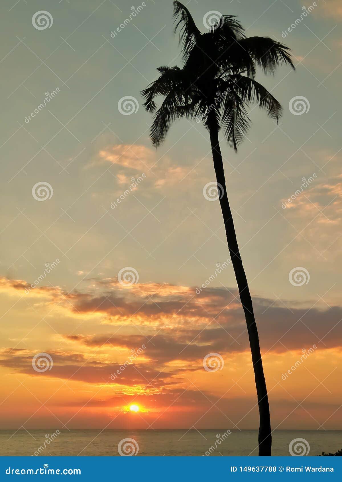 Zonsondergang en kokospalm