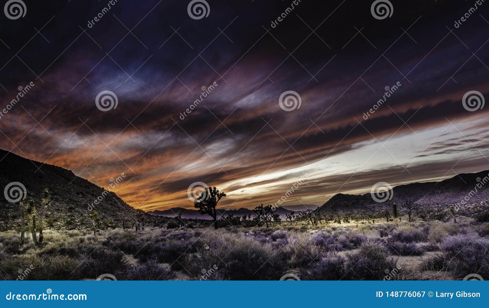 Zonsondergang in Joshua Tree National Park California