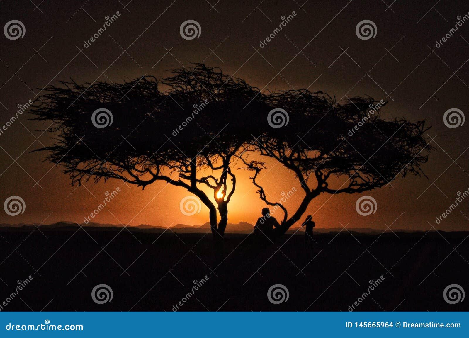 Zonsondergang met boom en begroeting