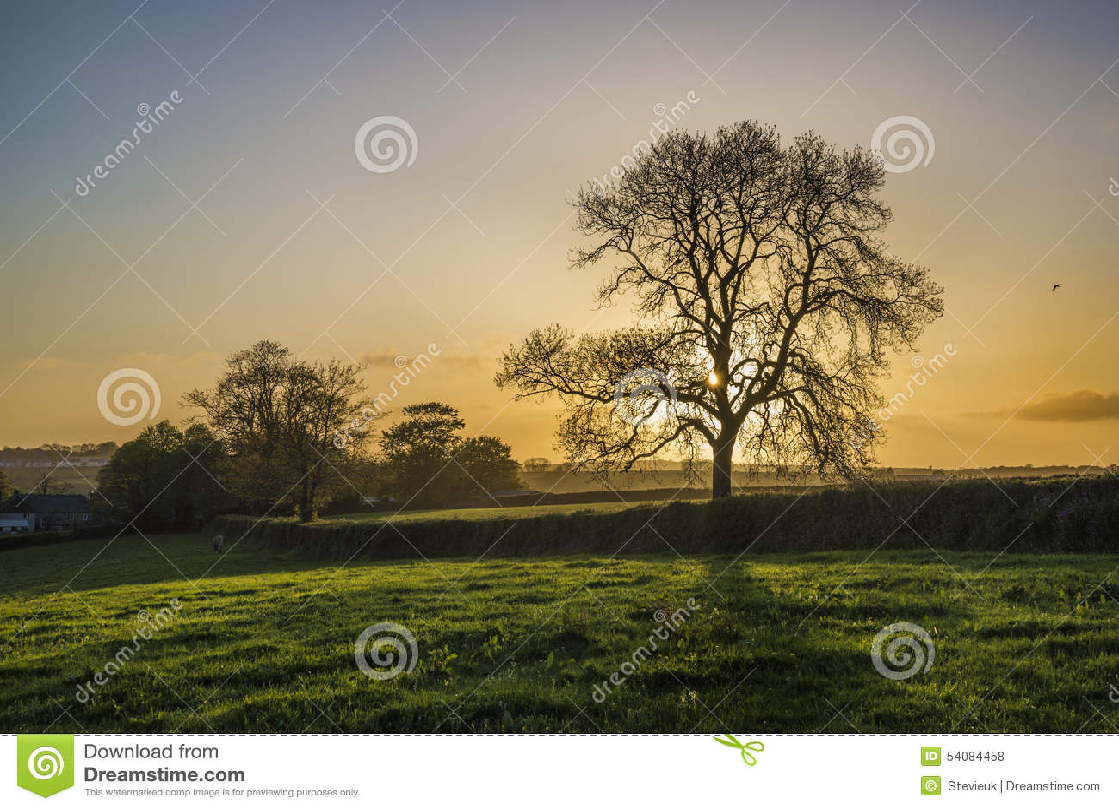Zonsondergang op landbouwbedrijfgebieden met boom en mooie bewolkte hemel, Cornwall, het UK