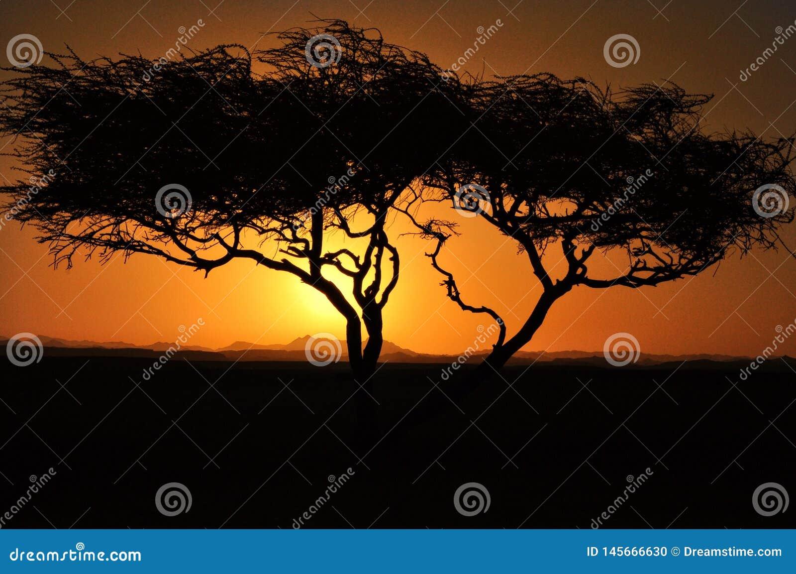 Zonsondergang over bergen met boom met zon die door de wolken van wolkenbergen glanst