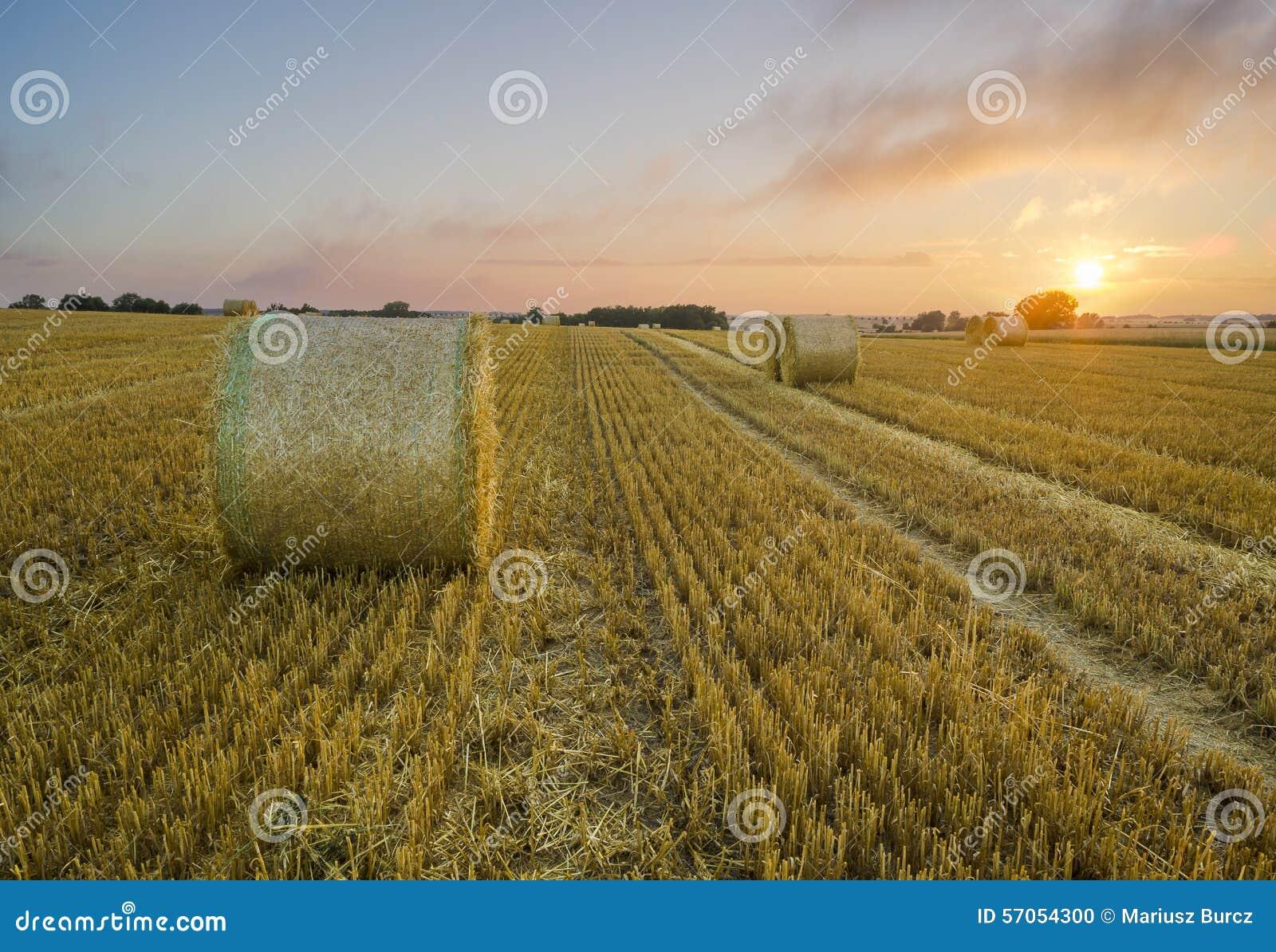 Zonsondergang over het gebied na oogst