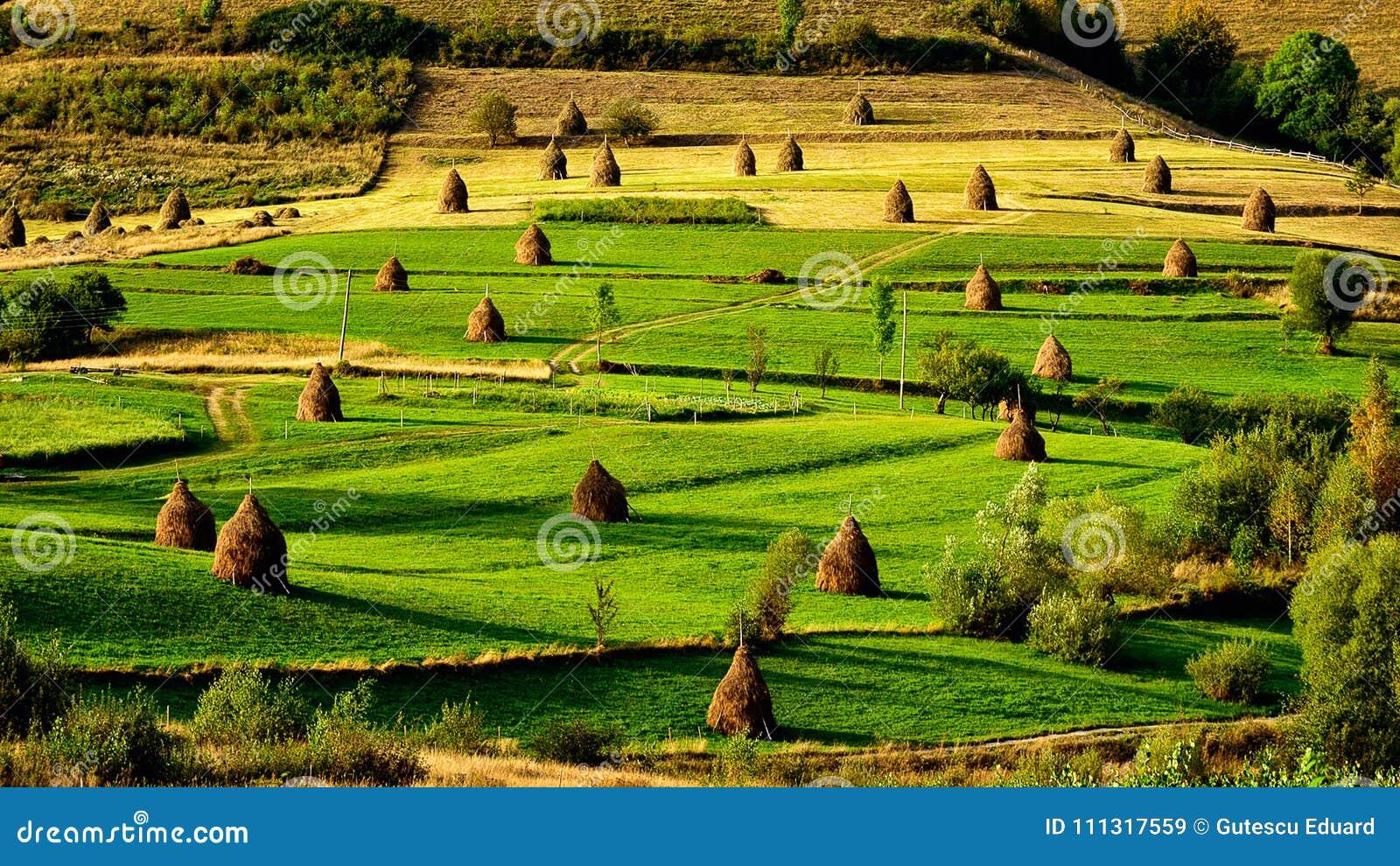 Zonsopgang in de provincie Roemenië van Transsylvanië met gebieden van hooiberg