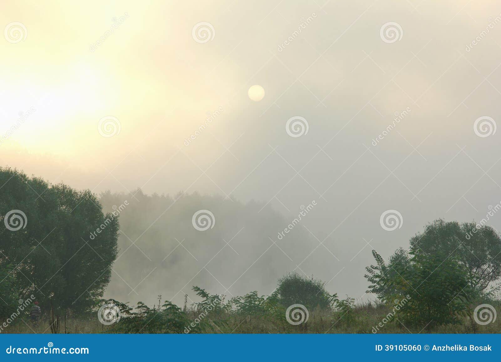 Zonsopgang in het bos met een dichte mist