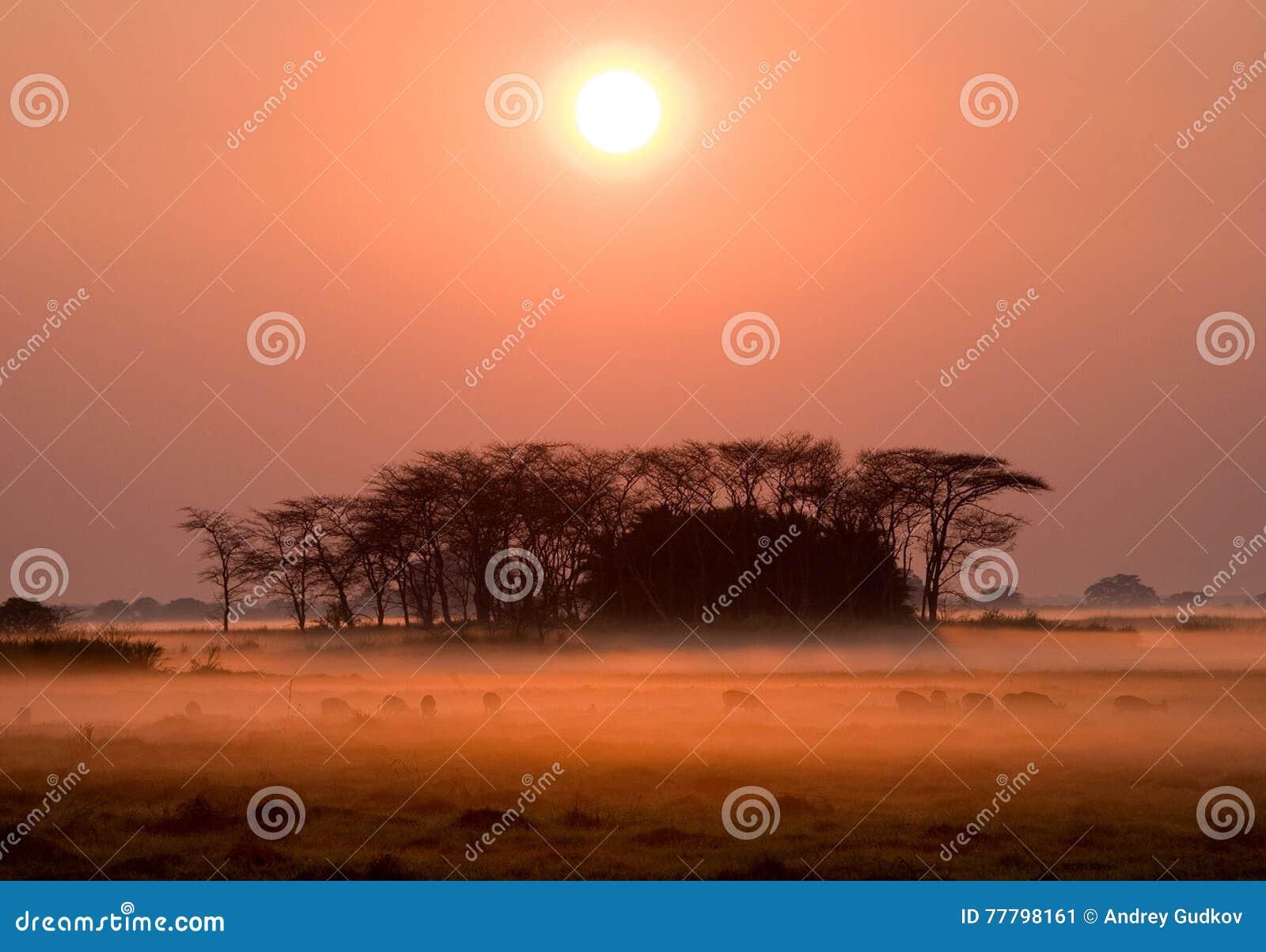 Zonsopgang in het Nationale Park van Kafue De overweldigende roze mist Afrika zambia