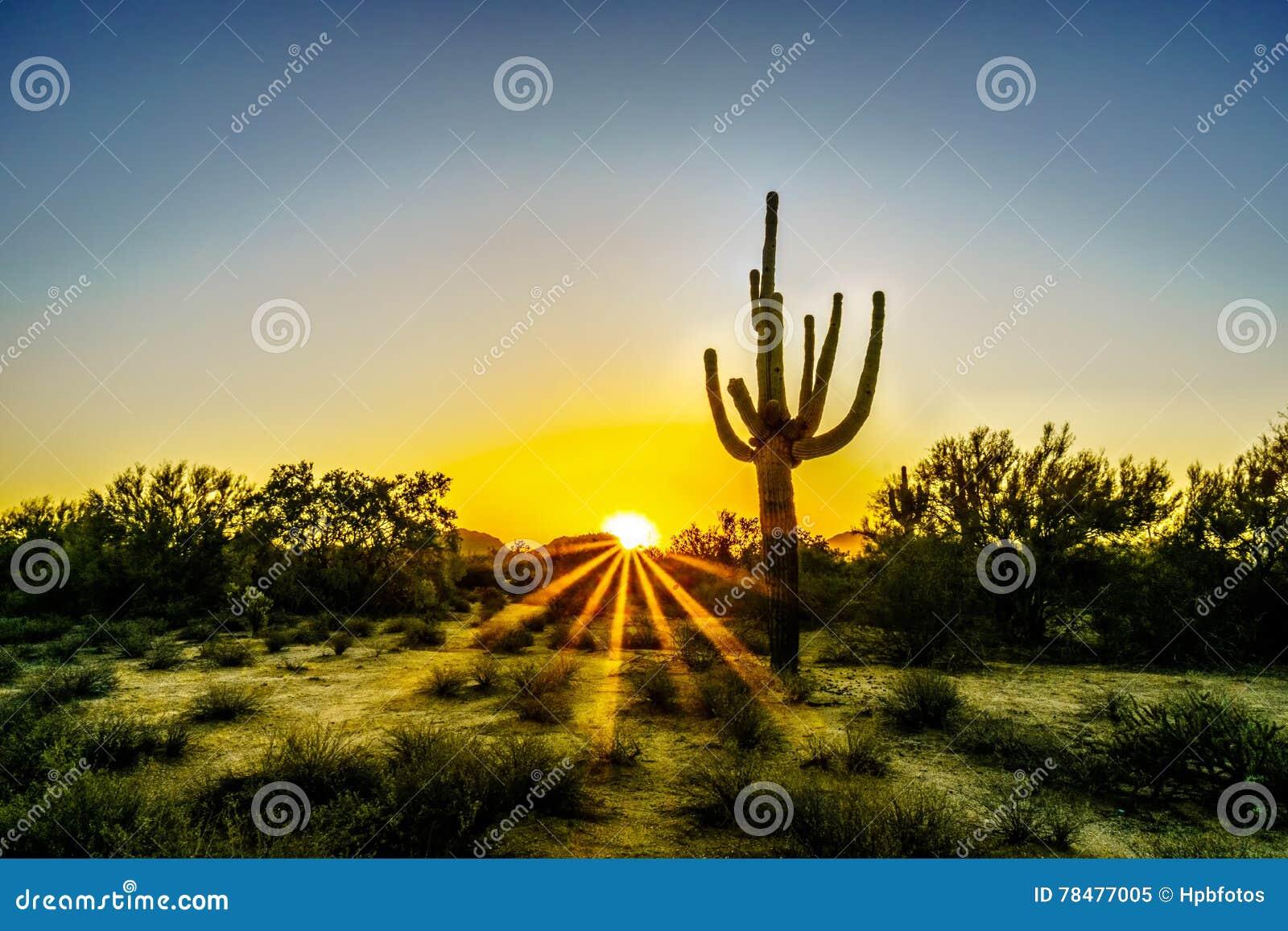 Zonsopgang met Zonstralen die door de Struiken in de Woestijn van Arizona glanzen