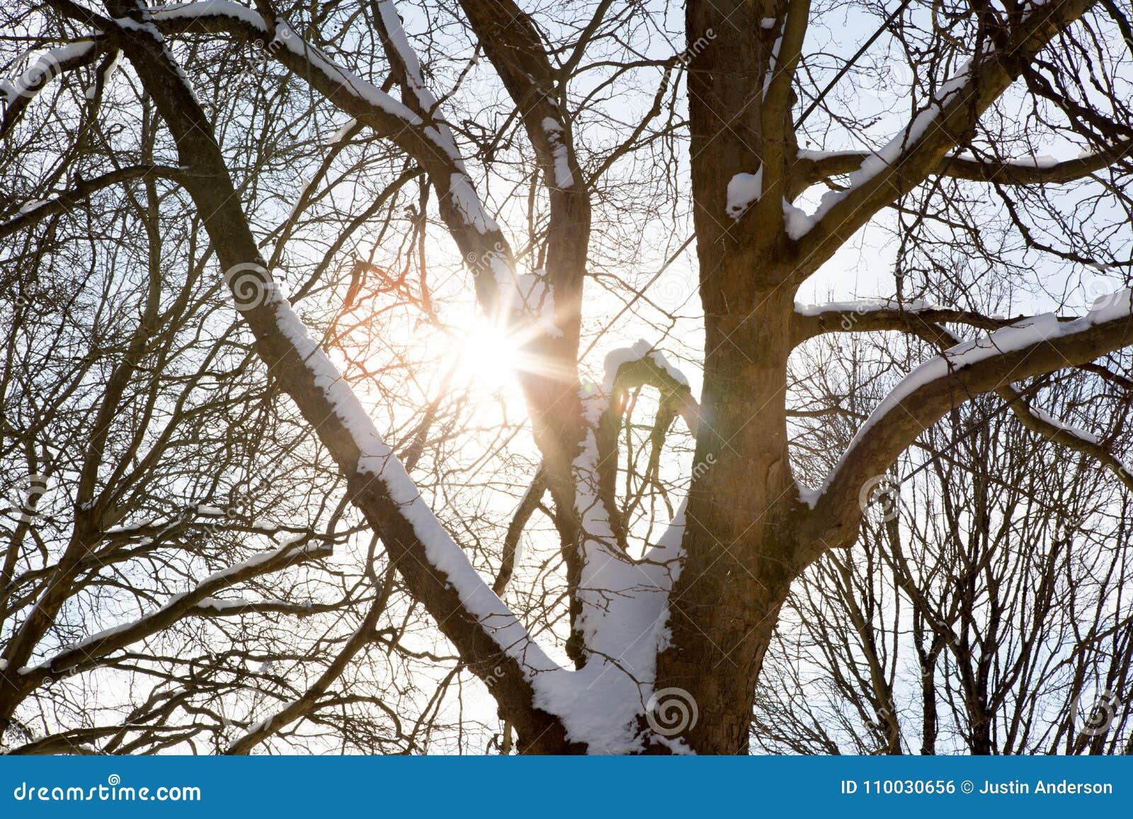 Zonstralen door een sneeuwboom