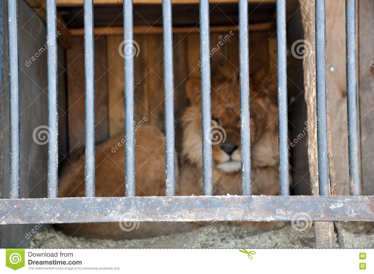 zoos animals prisons Zoos are like prisons zoos are captivity and entertainment centres where  collections of wild animals are exhibited in solitary, often in solitary confinement,  with.