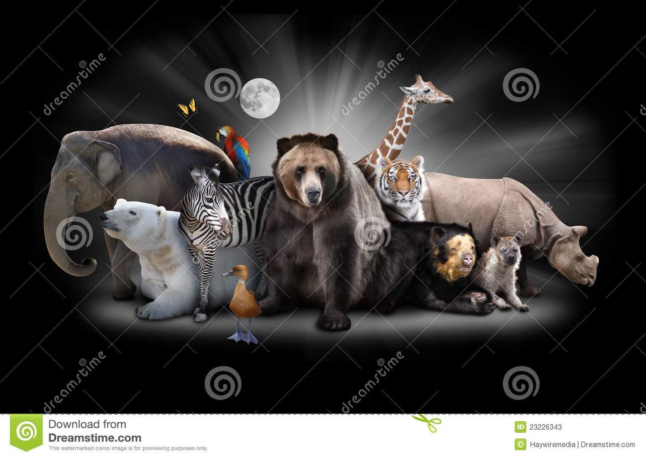 Zoo Animals At Night With Black Background Stock Photos